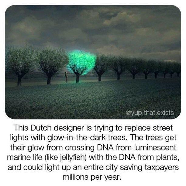 Светящиеся деревья, от кассира до директора и как жителей заставляют платить за ремонт улицы