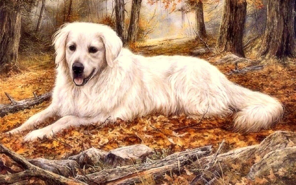 Изгнание собак, польза игр и инвестиции по методу Ходжи Насреддина