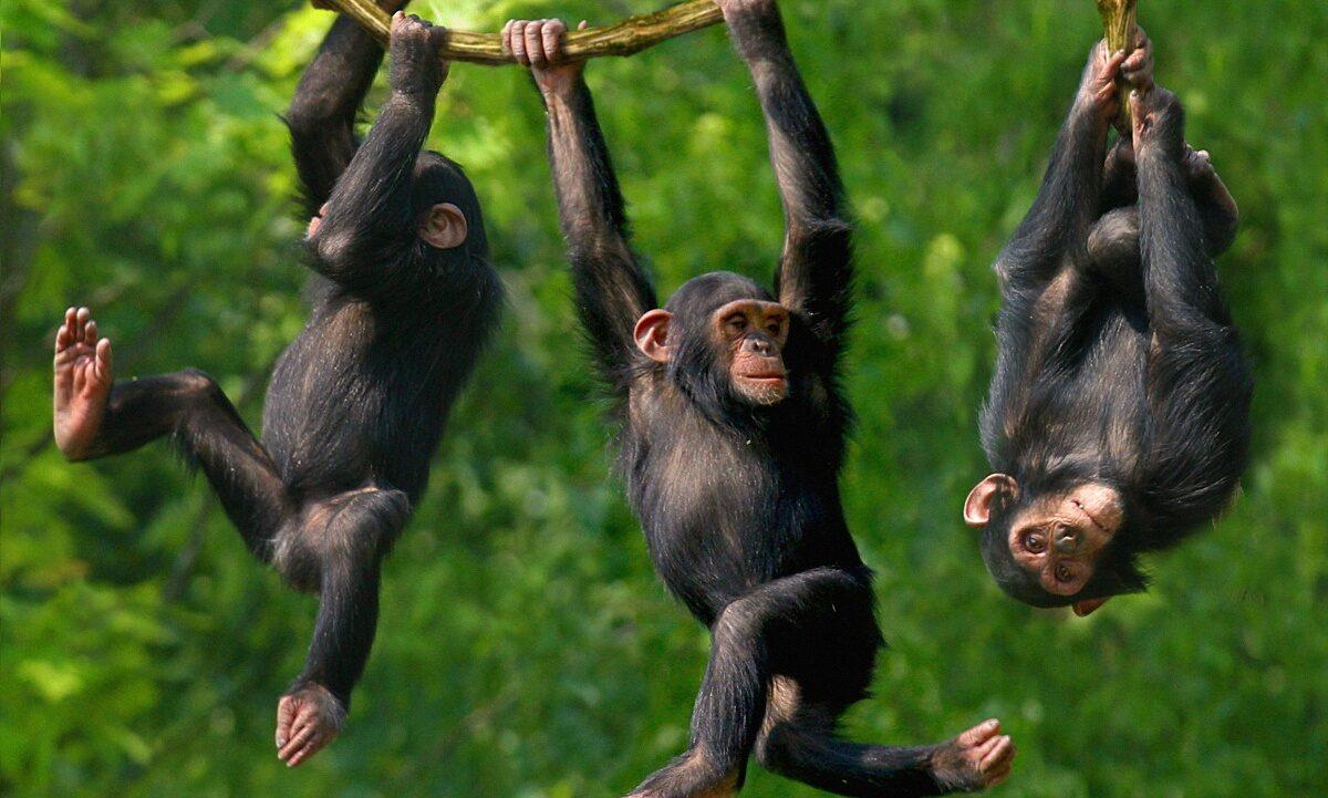 Шимпанзе-ниндзя, сельская школа и программисты после 35