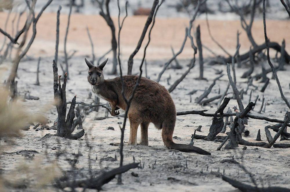 Причины пожаров в Австралии, проблемы российских лесов и запрет дров в Прибалтике